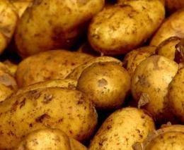 Сорт елизавета картофель. описание, происхождение и развитие