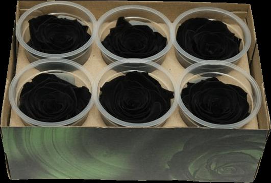 Черная роза символ