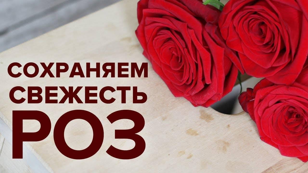 Продлить жизнь прекрасной розы, или что добавить в воду, чтобы цветы подольше стояли?
