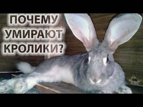 Мёртвый кролик — почему дохнут, что делать