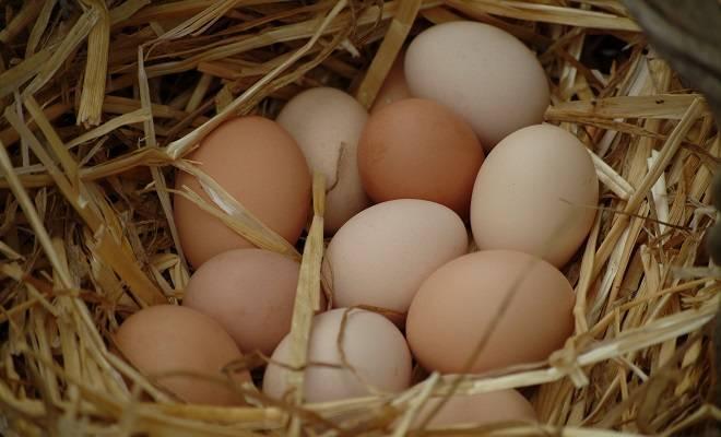 Сколько дней вылупляются цыплята