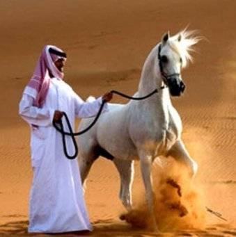 Самая дорогая лошадь в мире (фото). самые дорогие лошади в мире: топ 10