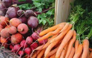Надо ли поливать морковь после посадки