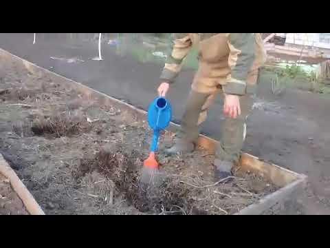 Чем подкислить почву для голубики