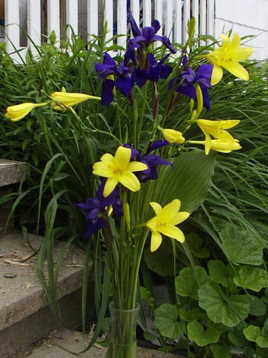 Луковицы лилий: когда пересаживать? уход за лилиями после цветения