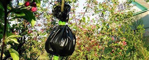 Как вырастить яблоню из черенка: рекомендации