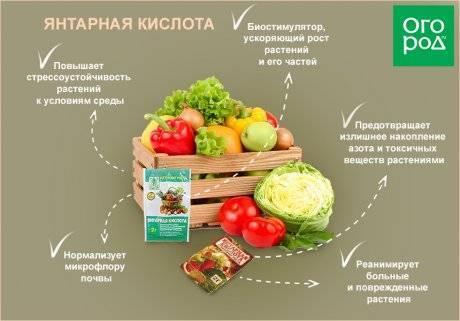 Янтарин: состав, действие, порядок применения для растений