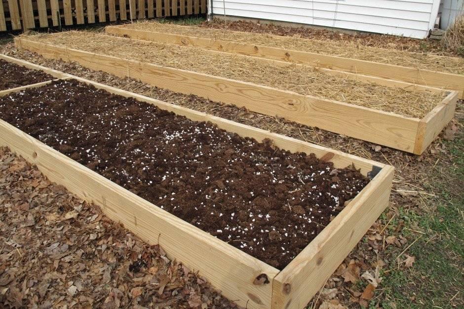 Выращивание моркови, удобрение, подкормка