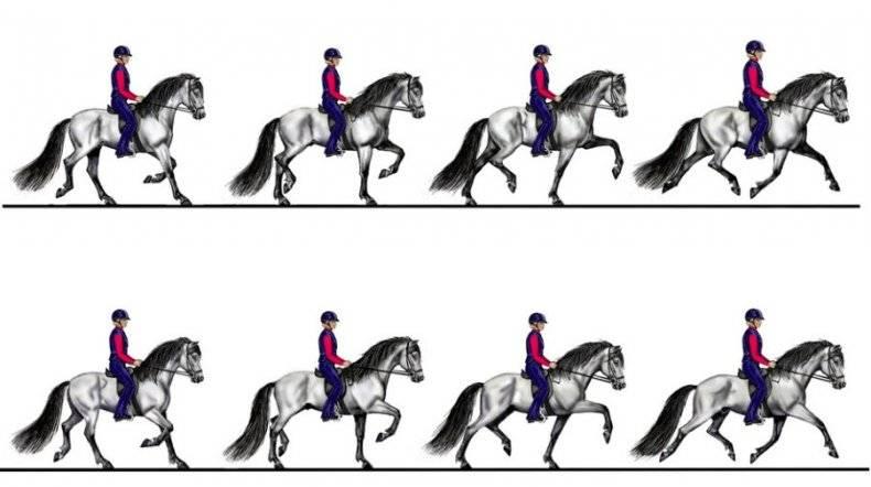 Аллюры лошадей и их характеристика