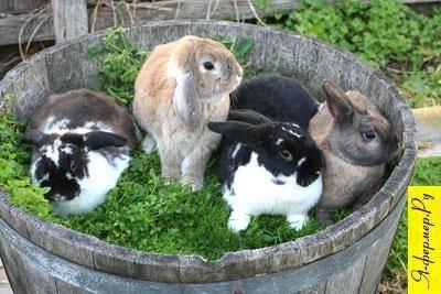 Как определить породу декоративного кролика по внешнему виду. породы декоративных кроликов – фото и названия