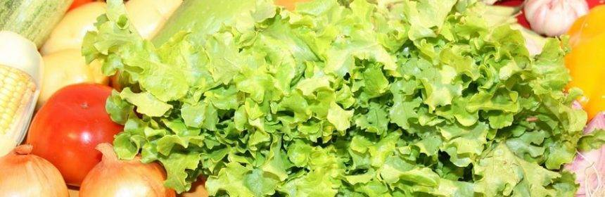 Когда и как сеять клевер в открытом грунте: посадка и уход за растением