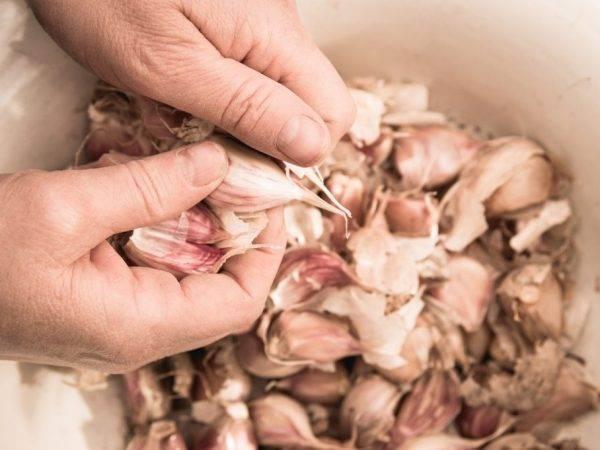 Чем подкормить весной чеснок, посаженный под зиму?