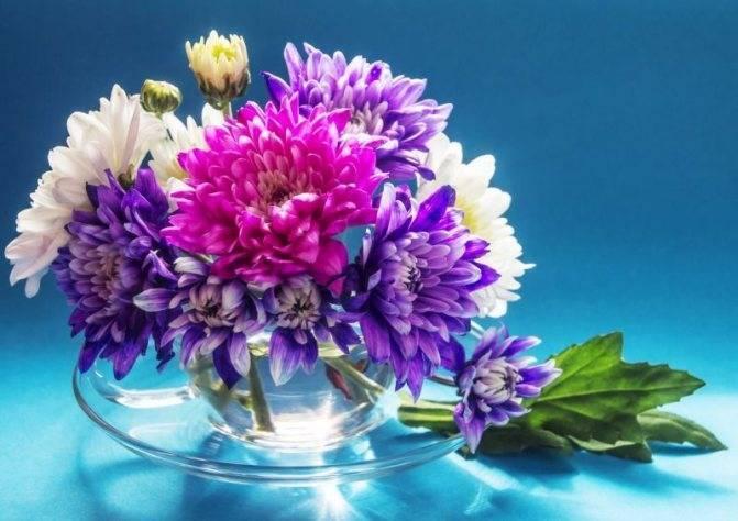 Как сохранять хризантемы в вазе с водой подольше (что добавить в емкость)