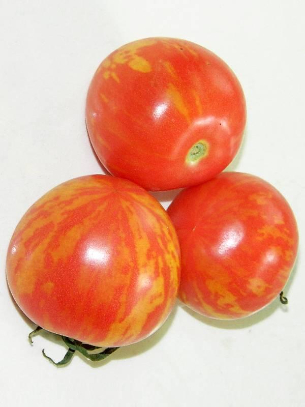Описание сорта томата тигровый, его характеристика
