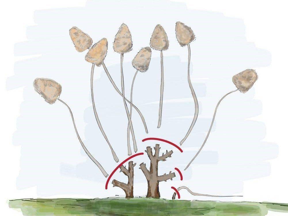 Обрезка гортензии осенью: подробная инструкция для новичков