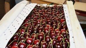 Гид по черешне: сорта, производители, цены и советы по выбору - афиша daily