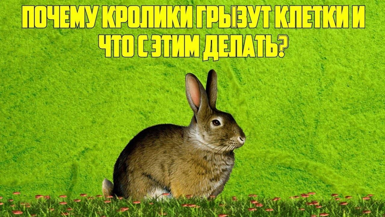 Дезинфекция клеток кроликов