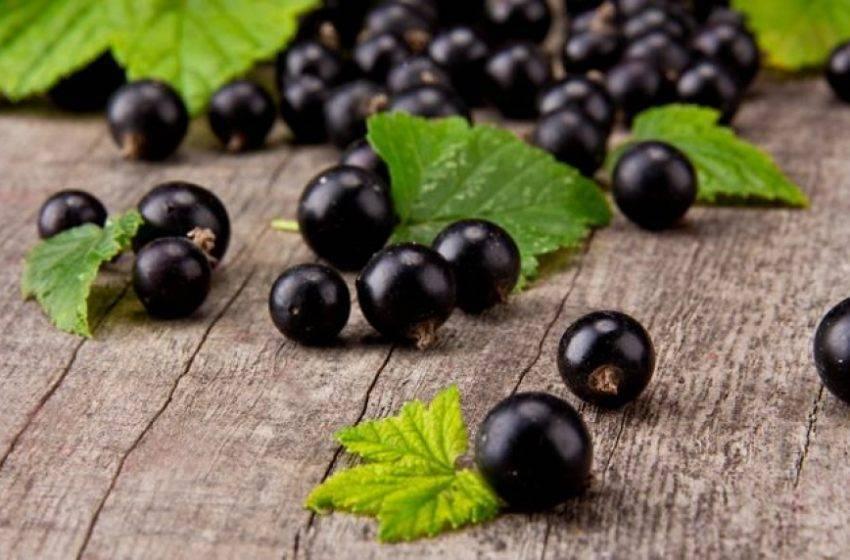 Черная смородина – свойства, польза, употребление, пищевая ценность, витамины