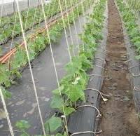 Выращивание в теплице огурцов: когда и как правильно сажать, сколько можно собрать, а также особенности посадки огурцов в теплицу из поликарбоната