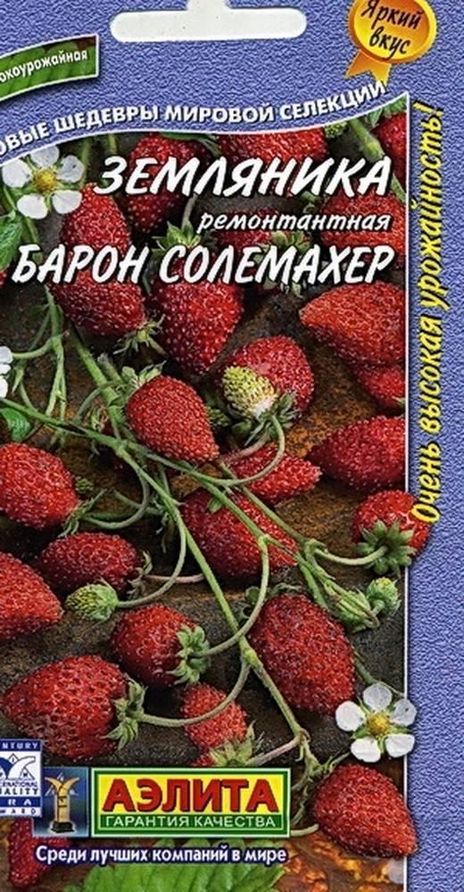 Земляника барон солемахер — собираем урожай до заморозков!