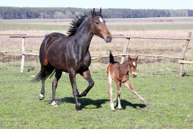 Выбор подковы и инструкция по ковке лошадей