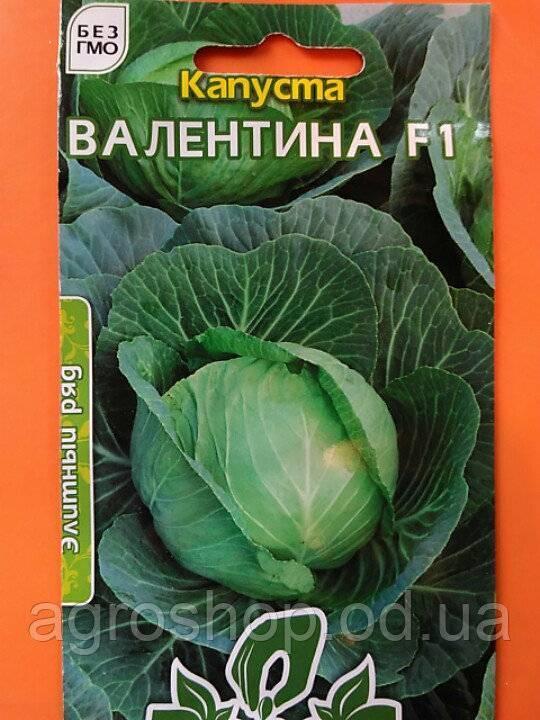 Сорт капусты валентина: описание внешнего вида и его отличительные особенности, а также как ухаживать за кочанами при выращивании и фото овоща