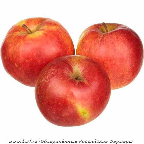 Яблоня айдаред – неприхотливый, высокоурожайный сорт со сладкими плодами
