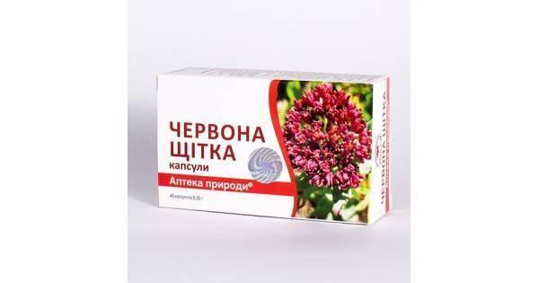 Красная щетка – лечебные свойства и 9 рецептов для мужского и женского здоровья