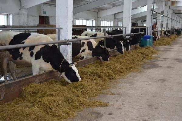 Машины и технологическое оборудование ферм и комплексов для крупного рогатого скота, помещения для содержания - машины и технологическое оборудование ферм и комплексов для крупного рогатого скота, свиней, птиц и