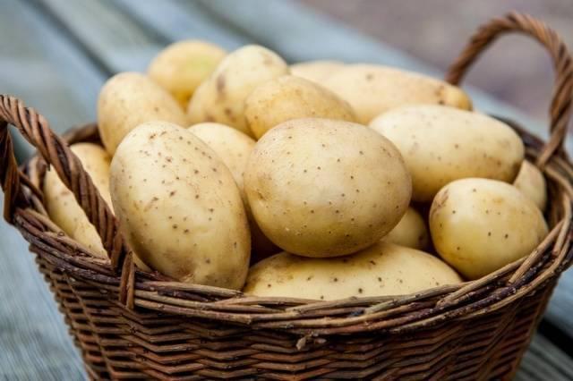 Картофель «велина»: характеристика сорта и особенности выращивания