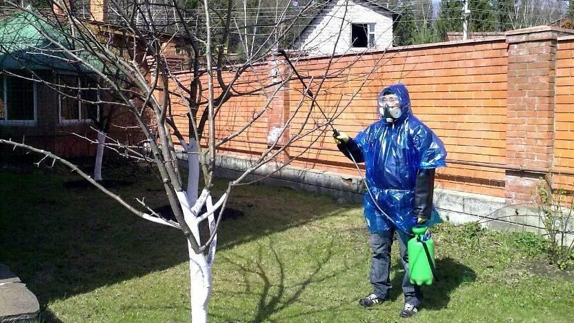 Почему гниют яблоки прямо на дереве, что делать и как бороться