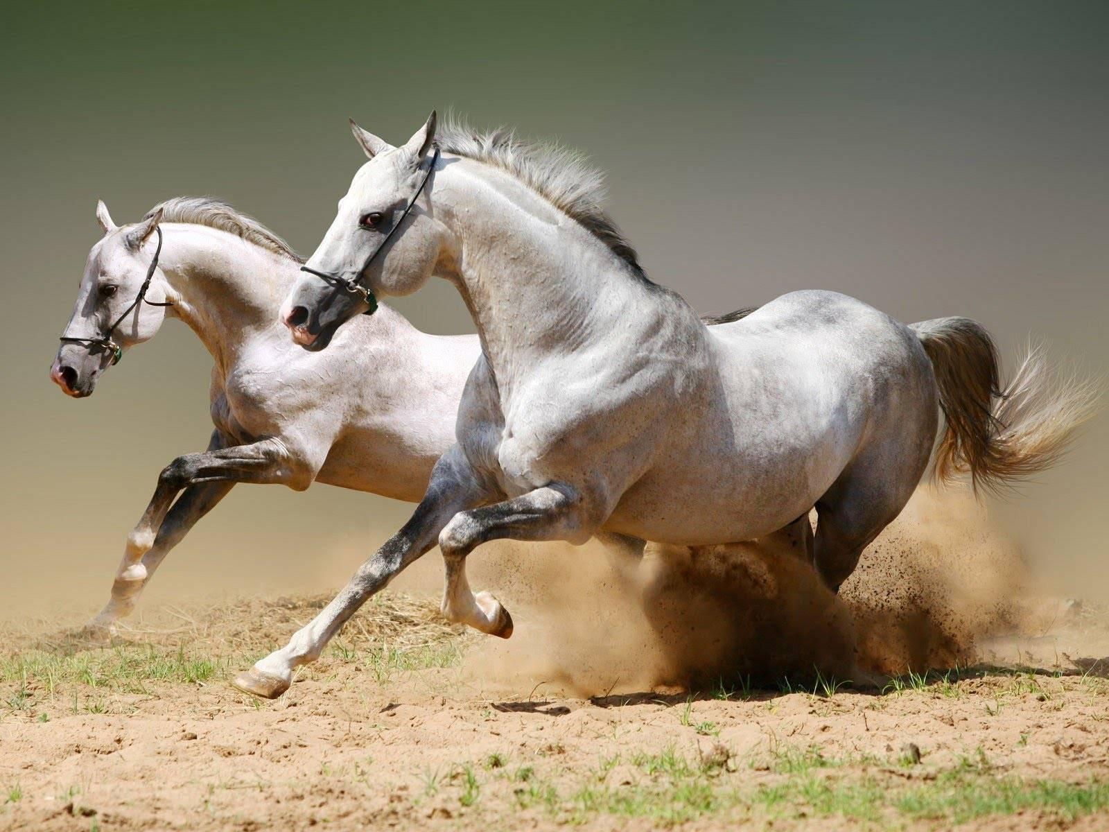 Интересно, сколько лет живут лошади?