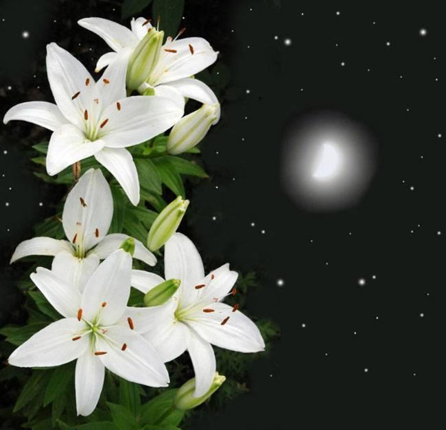 Обзор цветов, похожих на лилии
