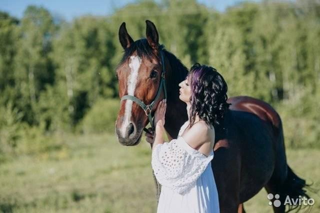 Ганноверская конкурная порода лошадей