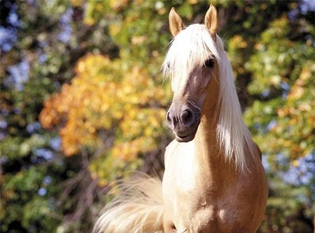 Срок жизни лошадей: сколько в среднем продолжительность жизни коня