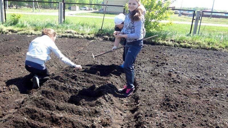 Все о выращивании моркови – подробная инструкция для начинающих