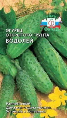 Огурец водолей: отзывы, фото, описание и характеристики сорта