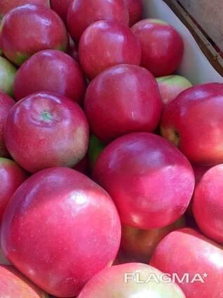 Яблоня айдаред: описание сорта, фото, отзывы садоводов