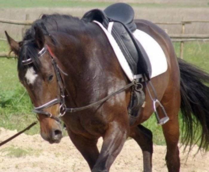 Как запрягают лошадь: подробная инструкция