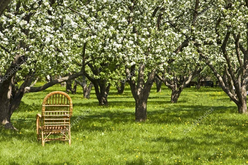 Расстояние между яблонями при посадке.