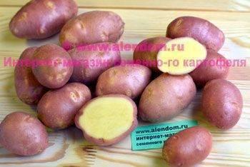 Картофель «ажур»: описание среднеспелого сорта, характеристика, фото и достоинства