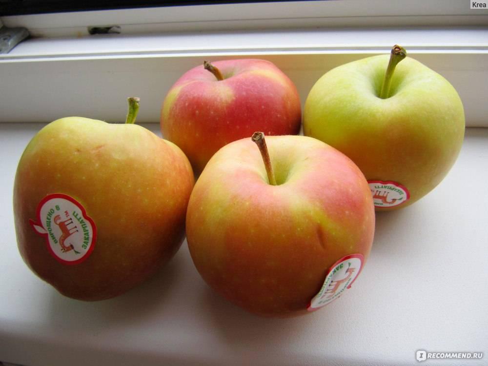 Яблоня гала: описание сорта, фото, отзывы садоводов