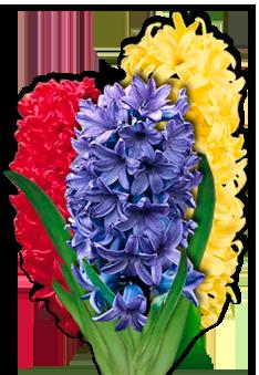 Гиацинт многолетний: популярные сорта и их выращивание