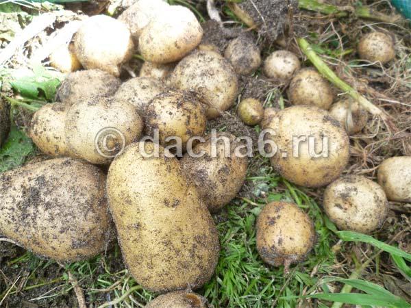 Метод галины кизимой — огород без хлопот