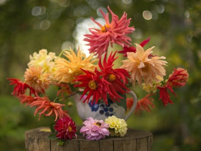 Удобрение для цветов: чем подкормить, чтобы обильно цвели