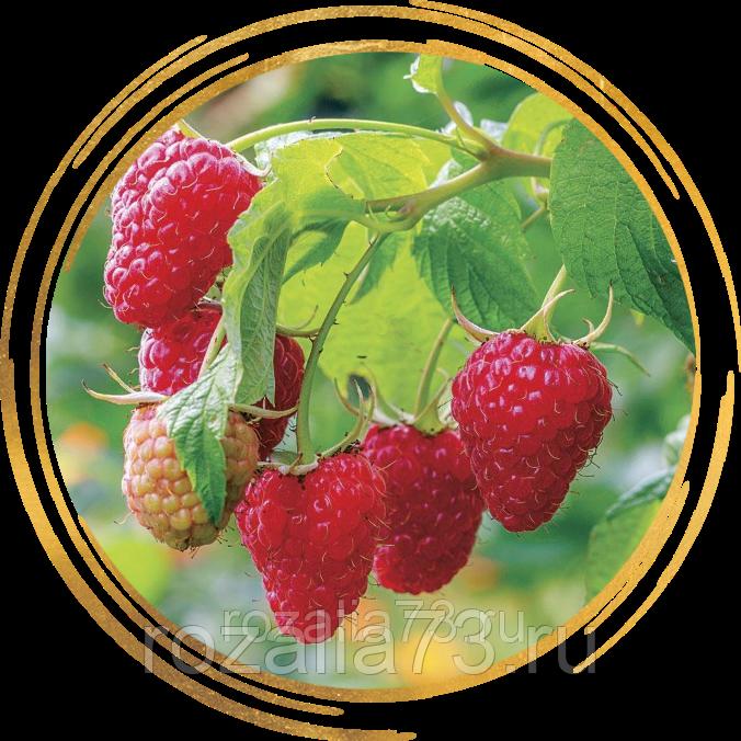 Малиновое дерево «крепыш»: характеристика и агротехника выращивания