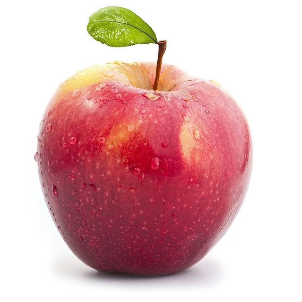 Яблоня «айдаред»: описание и характеристики сорта