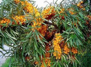 Как посадить дерево — пошаговая инструкция по правильной посадке декоративных, фруктовых и промышленных пород