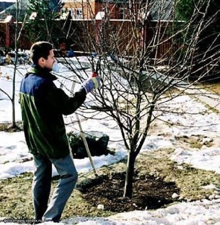 Садовые работы в марте, весенние работы в саду