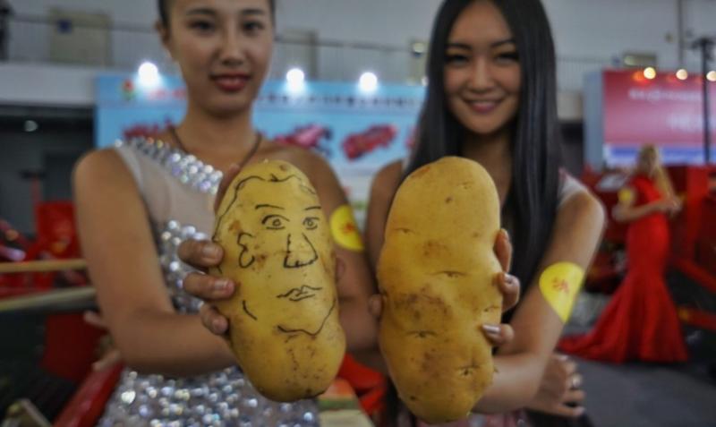 Китайский способ выращивания картофеля – 7 главных особенностей и подробное описание процесса